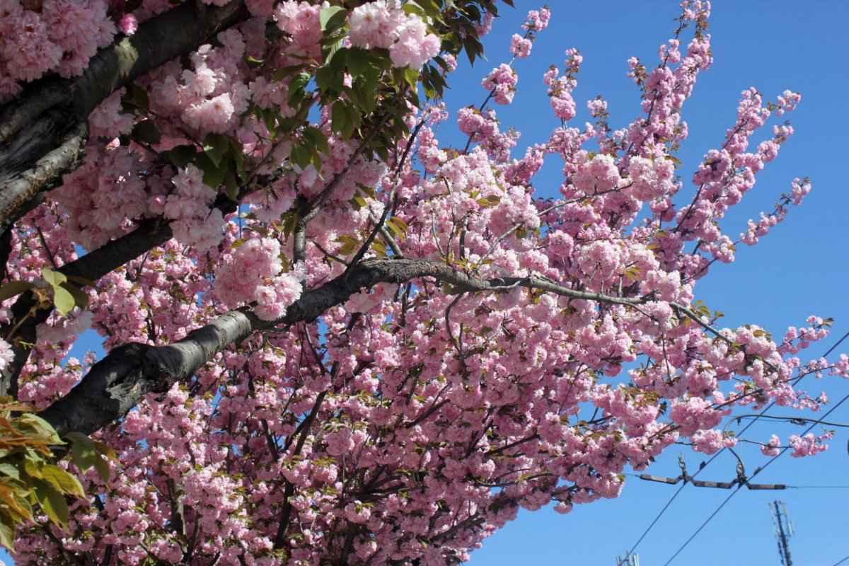 botsad_2018-04-22---magnolii 034-031.jpg