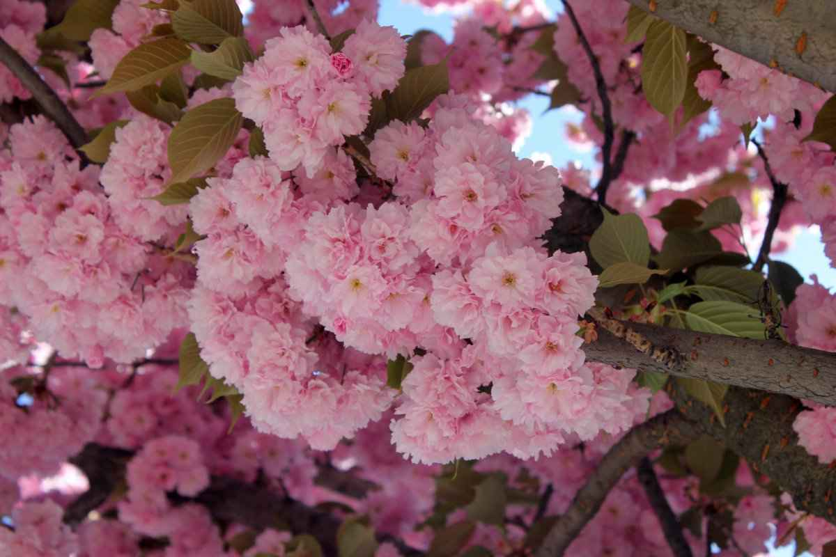 botsad_2018-04-22---magnolii 035-032.jpg