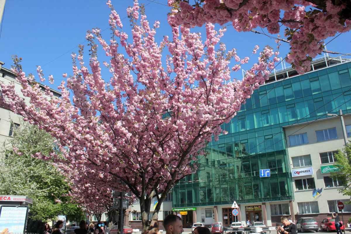 botsad_2018-04-22---magnolii 037-034.jpg