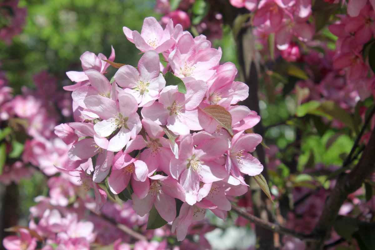 botsad_2018-04-22---magnolii 004-001.jpg