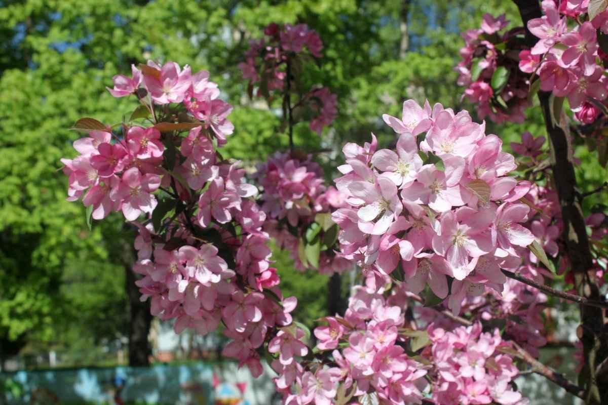 botsad_2018-04-22---magnolii 005-002.jpg