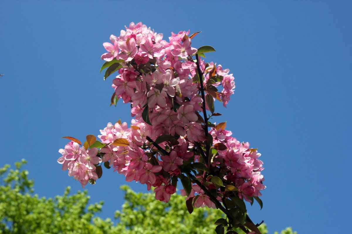 botsad_2018-04-22---magnolii 006-003.jpg