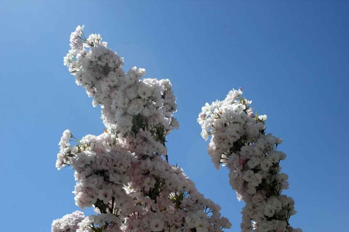 botsad_2018-04-22---magnolii 009-006.jpg