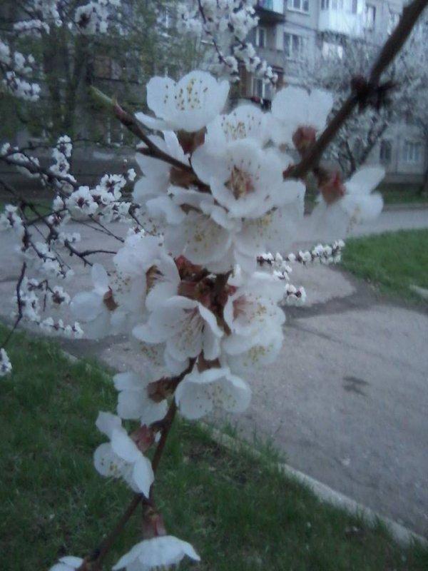 весна18_n.jpg